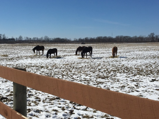 A spring dusting of snow in Illinois....